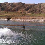 هواده اسپلش پرورش ماهی