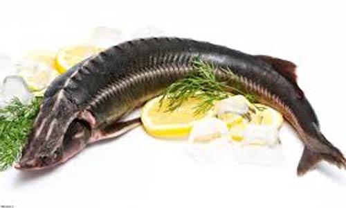 صادرات ماهی کپور به عراق