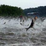 خریداران ماهی کپور