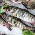 فروش ماهی کپور تازه