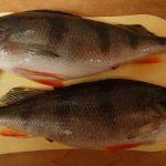 قیمت ماهی کپور گلگون