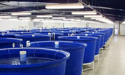 حوضچه های پلاستیکی پرورش ماهی